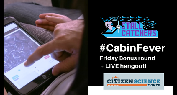 #CabinFever Friday Bonus round and LIVE hangout!