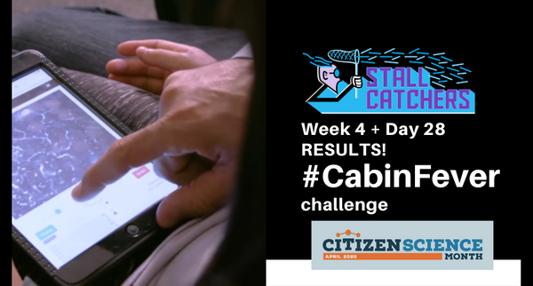 Day 28 & Week 4 of the #CabinFever challenge!